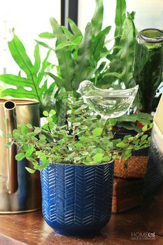 10 self watering methods to keep your plants alive while on vacation | Home Made by Carmona | #selfwateringsystem #plantglobes #wateringglobes #houseplant #plantcare