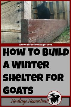 Goats | Goat Shelter | Goats in Winter | Pallet Shelter | A simple and effective pallet goat shelter that is large enough to hold more than two or three goats. It will keep off the rain, snow and cold!
