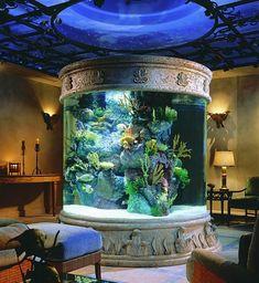fisch aquarium fürs wohnzimmer