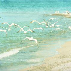 30% OFF SALE Seagull Photo, Beach Photography, Pastel Aqua Blue Ocean Seashore Picture, Nature Flock of Birds, 5x5 inch Print - Aloft