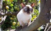 Flea Prevention & Holistic Treatments for Cats