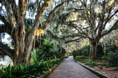 Why Tallahassee, Florida is a Great Place to Visit AND Why I'd Love to Live There