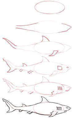 How to Draw a Shark | Click here for a full list of all the animals you can learn to draw