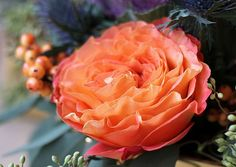 Coral Garden Rose pink finesse rose - coral pink with ruffled edges | the colors of