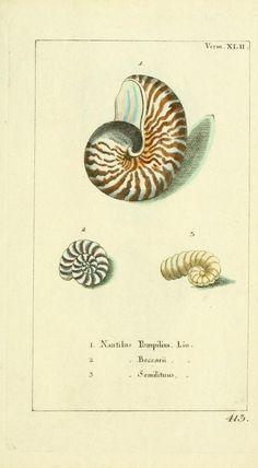Bd 9 plates (1787) - Gemeinnüzzige Naturgeschichte des Thierreichs : - Biodiversity Heritage Library