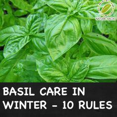 Basic Care in Winter
