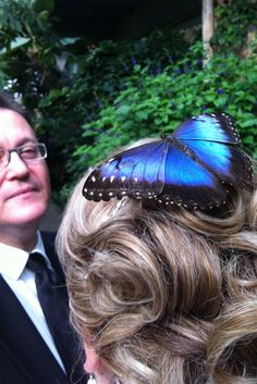 Seriously, a Blue Morph landed on me! The most beautiful butterfly in the world. The only way to catch a miracle is to believe in it..........