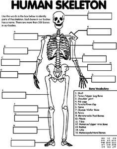 Human Skeleton Printable  This human skeleton printable from Crayola allows you to fill in the blanks for the different parts of the skeleton. It also comes with an answer key.