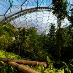 Wide view across the inside of the Rainforest Biome Eden project