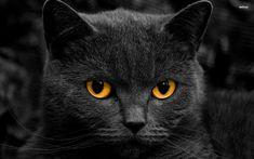 Black Cat | black cat wallpaper 1920x1080