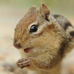 Squirrel jackpot