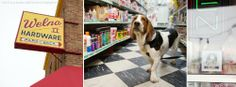#DogFriendly Review: Welna II Hardware in Minneapolis   Sidewalk Dog Blog