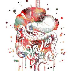 'Digestive system, anatomy art, Human Organs Gastrointestinal Tract' by Rosaliartbook Human Body Organs, Human Body Systems, Digestive System Anatomy, Systems Art, Biology Art, Human Anatomy Drawing, Microscopic Photography, Brain Art, Art And Craft Videos