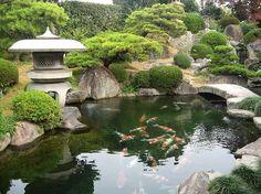 Japanese koi farms: