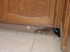 The Best Ways Get Rid of Mice In Your House and Garage   On the ...