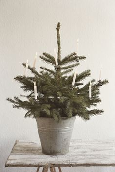DECOR | small tree in tin pot with candles