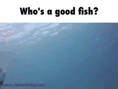 Who's a good fish? GIF