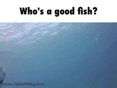 Who's a good fish? GIF