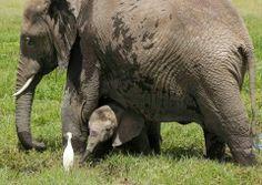 Elephant Mom &Baby