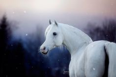 Iceprincess Winter Schnee, Pretty Horses, Animals, Grey, Horses, Unicorns, Horses In Snow, Nice Asses, Photo Illustration