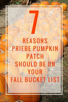 Priebe Pumpkin Patch Review in Crawfordsville |  Indiana | Pumpkin Patch | Things to Do in Indiana | Fall Family activities | Punkin Patches in Indiana | Indiana Bucket List