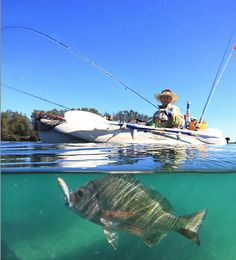 Bream fishing Aussie style! Kayaks are becoming increasingly popular with mad keen fishermen Down Under. Makes it easier to get to those spots impossible to reach with a boat.