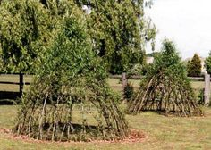 Living Willow Tepee - something for our next garden