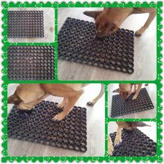 easy clean enrichment dog toy - Google Search