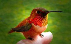 小さくて可愛いハチドリ