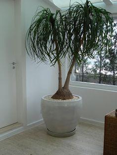 1000 images about planta para apartamento on pinterest - Plantas d interior ...