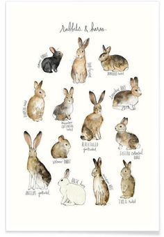 Rabbits and Hares en Tirage d'art premium