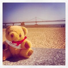 #KaplanBear #News! He's posing for our colleague Emily by #Gwangahn #beach in #Busan, #Korea. Emily and Drew are meeting #students who want to do #degree in a #ukuniversity.