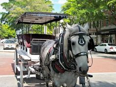 Love the Carriage Rides in Wilmington NC we had a blast