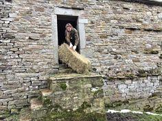 Filling up hayracks......