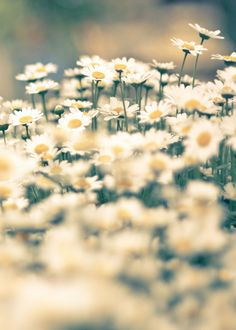 Flowers by Tay  on 500px