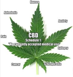 """CBD Cannabidiol: The side of marijuana the feds don't talk about... CBD reverses alcohol-induced brain damage CBD is a very effective treatment option for social anxiety CBD """"turns off"""" the cancer gene found in metastasis CBD is a potent anti-psychotic medicine"""