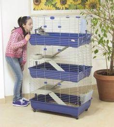 explore cage CA lapin