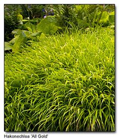 Pacific Northwest garden writers: Top Ten plant lists