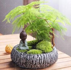 Cheap asparagus fern seeds, Buy Quality fern seeds directly from China bamboo bonsai Suppliers: Asparagus Fern Seeds (Asparagus Setaceus)--Small Bamboo Bonsai Setose Asparagus Plants ,Clean the air potted Terrarium Plants, Bonsai Plants, Bonsai Garden, Succulents Garden, Planting Flowers, Potted Plants, Potted Garden, Small Bamboo Plants, Small Indoor Plants