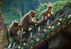 Chaing Rai, Thailand. The Monkey Temple. I'm the dummy who bought 30 bananas and was surrounded by monkeys within minutes.... hahaha