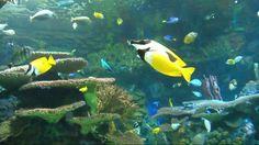 """Ripley's Aquarium"" Toronto Canada"