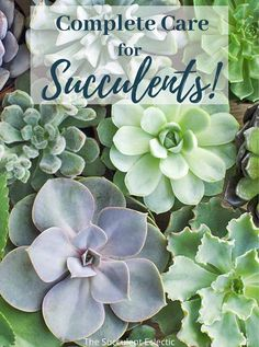 Learn all about Succulent Care - from the best soil for succulents and how to water succulents to propagation, best grow lights and fertilizer. Learn why succulents stretch, why they change color and how to get the most color from your plants. How to control pests on succulents, what aerial roots mean and which succulents go dormant, when. This is your one-stop place for learning all about succulent care! #succulents #succulentcare Best Soil For Succulents, Planting Succulents, Root Meaning, Best Grow Lights, Succulent Care, Propagation, Garden Spaces, Pest Control, Indoor Plants