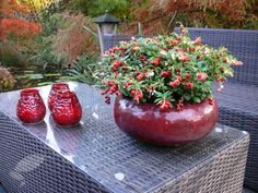 Buy cowberry Vaccinium vitis-idaea 'Red Candy': Delivery by Crocus.co.uk