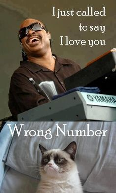 Grumpy cat, Stevie Wonder. I just called to say I love you, Wrong Number.