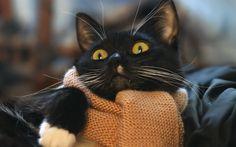 cat_face_scarf_