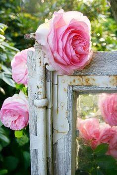 Shabby roses