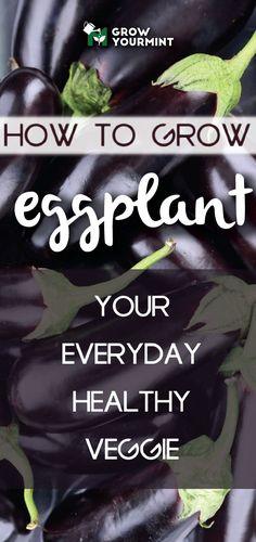 How to grow eggplant, your everyday healthy veggie for meals! #growyourmint #garden #gardening #eggplant #healthy #organic