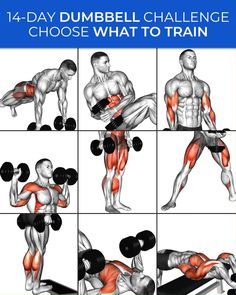 Gym Workout Chart, Full Body Workout Routine, Gym Workout Videos, Daily Exercise Routines, Gym Workout For Beginners, Abs Workout Routines, Muscle Gain Workout, Muscle Building Workouts, Muscle Fitness