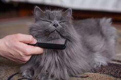 Grooming 101: What Type Of Brush Is Best For My Cat?