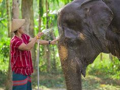 Book your dream holiday at the Elephant Hills, Khao Sok, Khao Sok and expect a warm welcome with Tropical Sky.